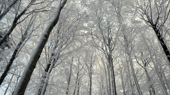 vinter træer © KirstenKKester.com | Kirsten K. Kester