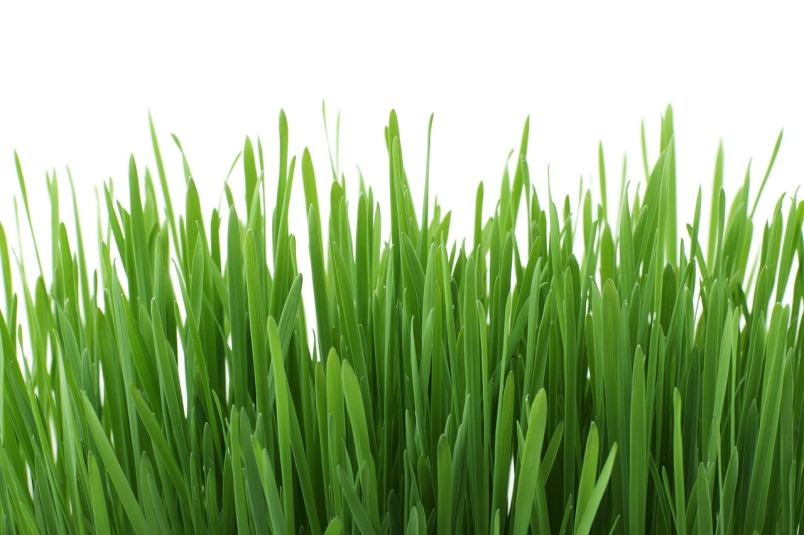 græs © KirstenKKester.com   Kirsten K. Kester