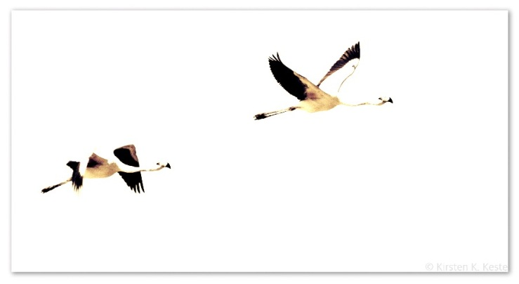 Flamingoer ved Atacamaørkenen © KirstenKKester.com | Kirsten K. Kester